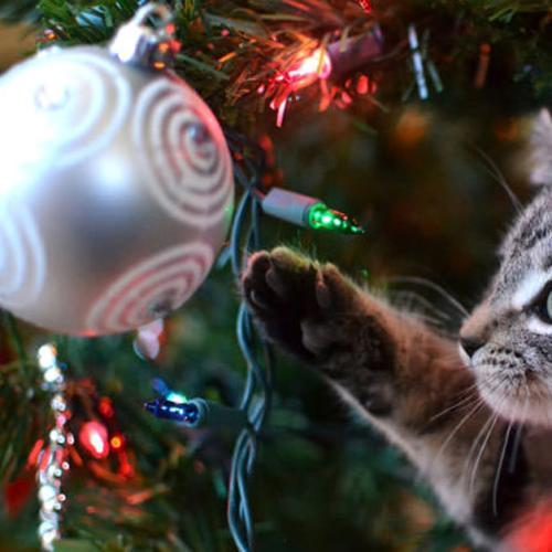 The Ultimate Gift Guide For Your Pet