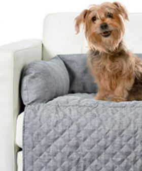 Kmart are selling a couch topper for pets