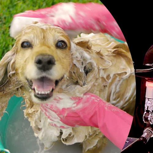 Jackie Used Dog Shampoo And Swears It Works Wonders!