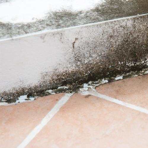 Seven Mould-Busting Tips After All This Rain