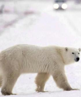 A US Man Has Been Charged For Killing A Polar Bear