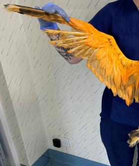 'Exotic' Bird Turns Out To Just Be Seagull Covered In Curry