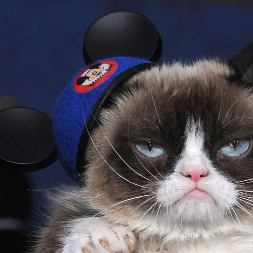 Internet Sensation Grumpy Cat Has Died
