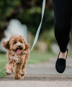 The Ultimate 'Dog Walking Shoe' Has Been Revealed