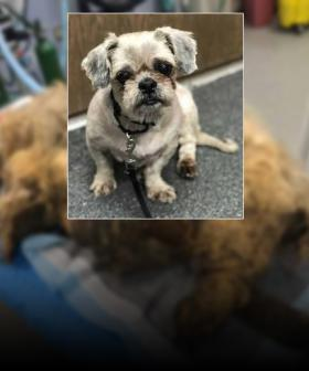 Life Saving Makeover For Dog With Fur So Matted It Couldn't Move