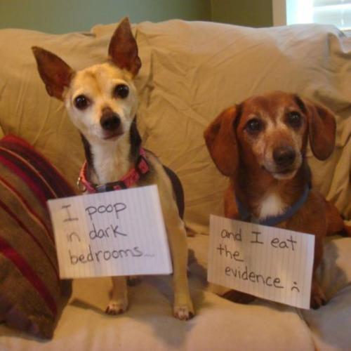 These Dog Shaming Pics Will Make You Lol