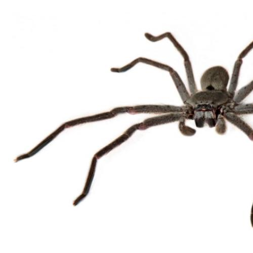 The Spider Statistic That Will Make Your Skin Crawl
