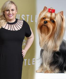 Rebel Wilson To Host New Dog Style Series Called 'Pooch Perfect'