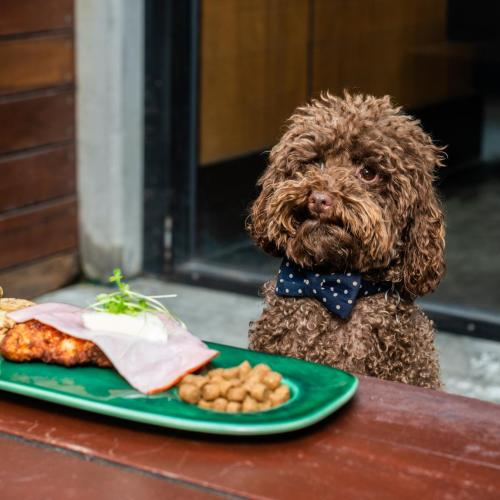 This Pub Is Dishing Up $5 Parmas For Your Dogs!