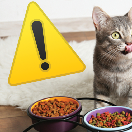 Cat Owners Warned Over Their Feeding Behavior That Could Lead To Blindness & Death