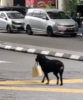 WATCH: Video Of Dog Carrying Owner's Handbag Goes Viral