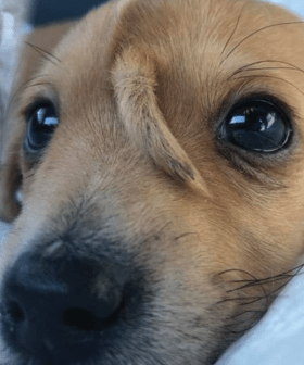 'Coolest Puppy Ever' Born With Second Tail On Its Head Has Been Rescued