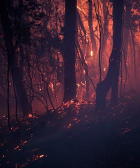 Newsreader Brooklyn Talks About What 'Catastrophic' Fire Danger Means For Us
