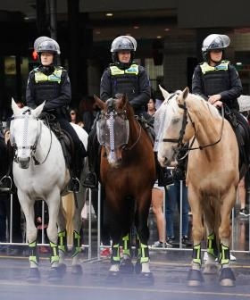 Police Horse And Officers Assaulted In Sydney