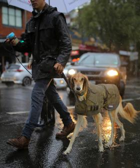 NSW Prepares For Heavy Rain In Fire Areas