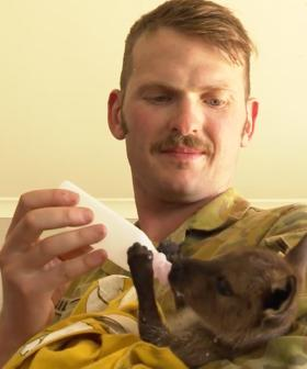 Aussie Soldiers Show Their Softer Side By Treating Bushfire-Affected Wildlife