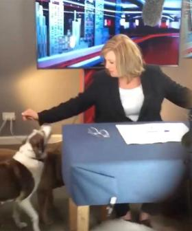 Tracy Grimshaw's Dogs Interrupt A Current Affair As She Broadcasts From Home