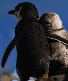 This Photo Of Two Widowed Penguins Consoling Each Other While Enjoying The View Is Too Much!