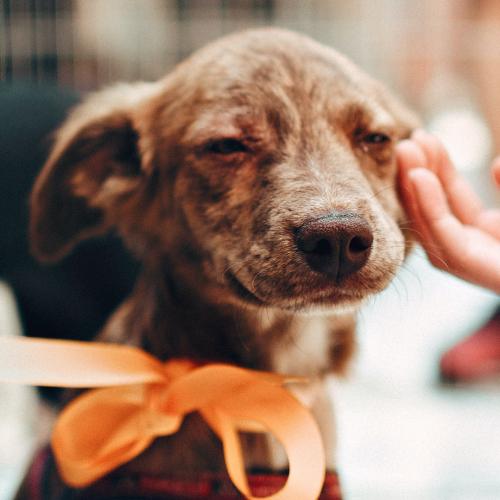 If Someone Pats My Dog, Can I Get Coronavirus?