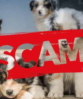 $700K LOST: The Puppy Scam That Is Occurring Across Australia As People Look To Isolate With Furry Friends