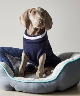 Kmart Is Selling Winter Jackets For Your Pets To Keep Them Toasty Warm