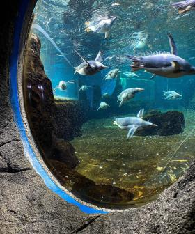 Grab Your Bestie & Get Free Entry Into Sydney Aquarium TODAY For International Friendship Day!