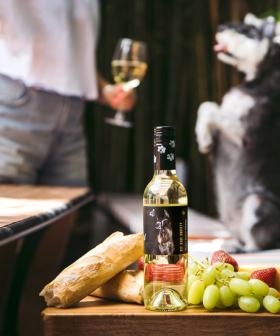Attention Pet Lovers: We Have the Pawfect Wine For You!