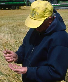 Wet, Windy NSW Weather Could Ruin Crops