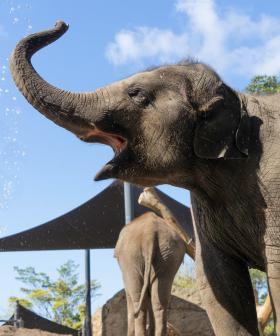 Three-Year-Old Elephant Dies At Sydney's Taronga Zoo