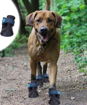 No More Wet Paws, Kmart Are Now Selling Gumboots For Your Pets
