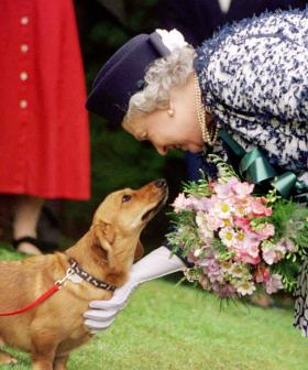The Queen's Two New Dogs Are Helping Her Cope With The Death Of Prince Philip