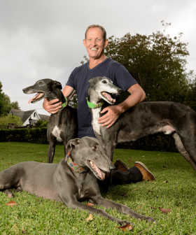 On The Lookout For The Perfect Furry Friend? A Greyhound Is Your Answer!