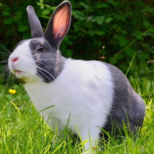 The Way This Bunny Died Will Make You Rethink Taking Your Pets On Holiday