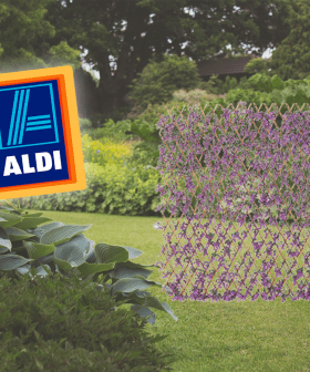 Aldi's Selling PURPLE Garden Trellis' So Now Green Just WON'T Do!